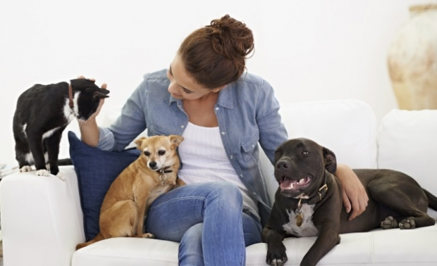 pet sitter and dogs