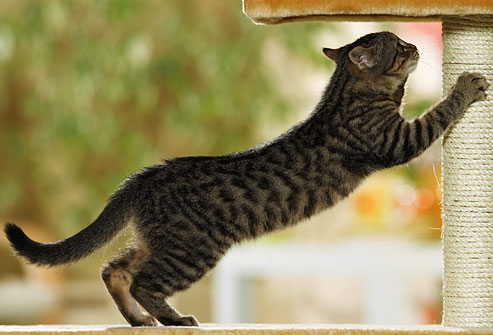 kitten scratching post