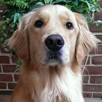 dog excellent care